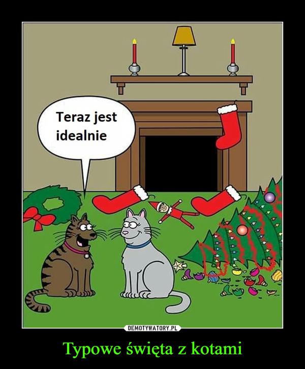 Typowe święta z kotami –