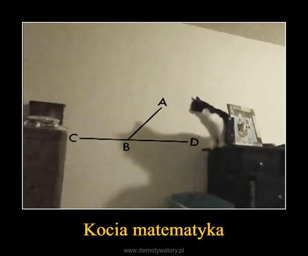 Kocia matematyka –