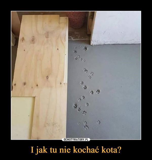 I jak tu nie kochać kota? –