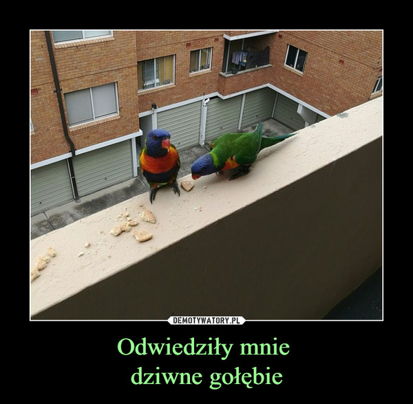 Odwiedziły mnie dziwne gołębie –