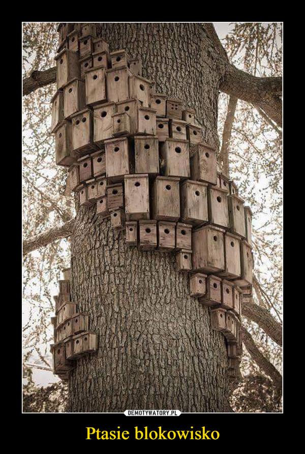 Ptasie blokowisko –