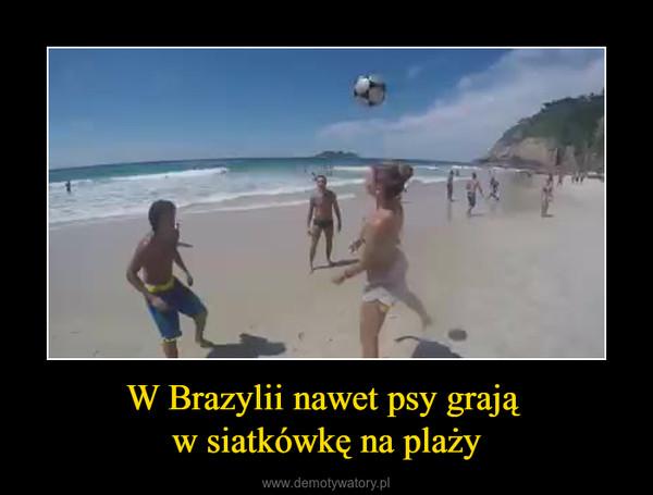 W Brazylii nawet psy grają w siatkówkę na plaży –