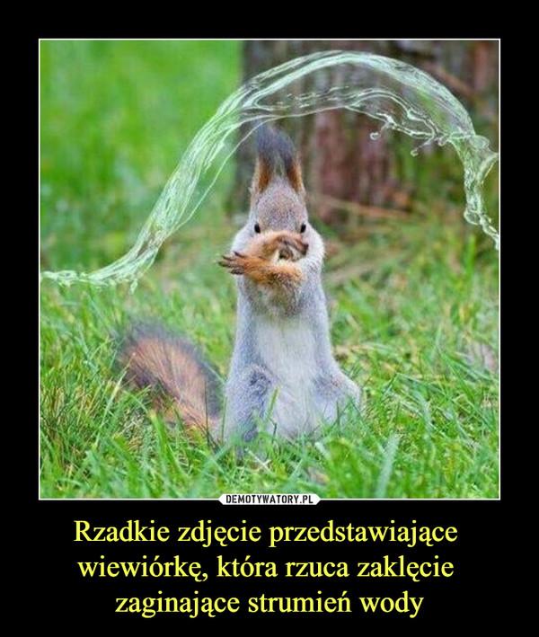 Rzadkie zdjęcie przedstawiające wiewiórkę, która rzuca zaklęcie zaginające strumień wody –
