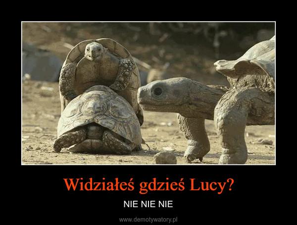 Widziałeś gdzieś Lucy? – NIE NIE NIE