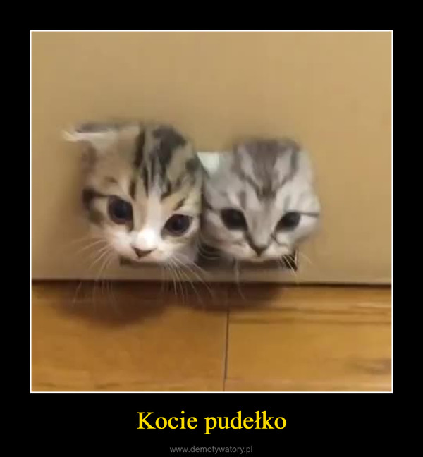 Kocie pudełko –