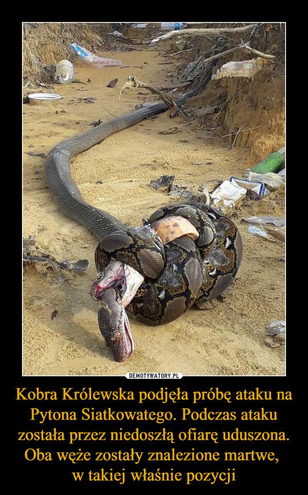 Kobra Królewska podjęła próbę ataku na Pytona Siatkowatego. Podczas ataku została przez niedoszłą ofiarę uduszona. Oba węże zostały znalezione martwe, w takiej właśnie pozycji –
