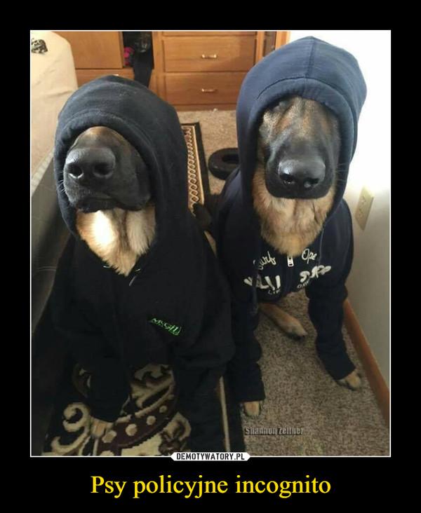 Psy policyjne incognito –