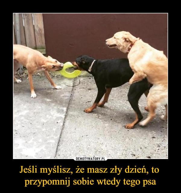 Jeśli myślisz, że masz zły dzień, to przypomnij sobie wtedy tego psa –