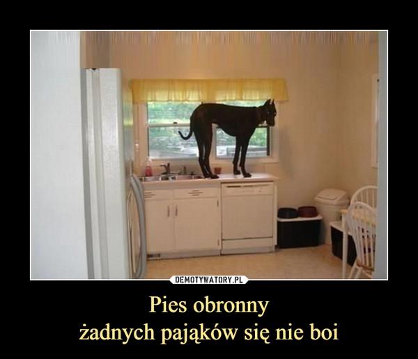 Pies obronnyżadnych pająków się nie boi –