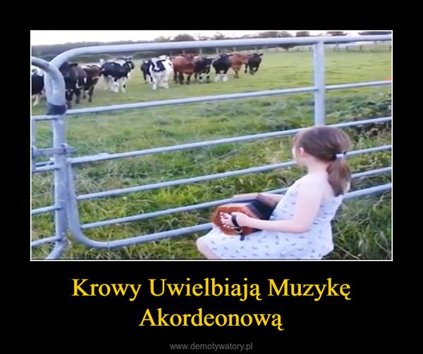 Krowy Uwielbiają Muzykę Akordeonową –
