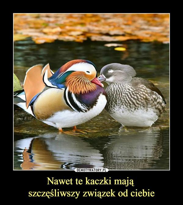 Nawet te kaczki mają szczęśliwszy związek od ciebie –