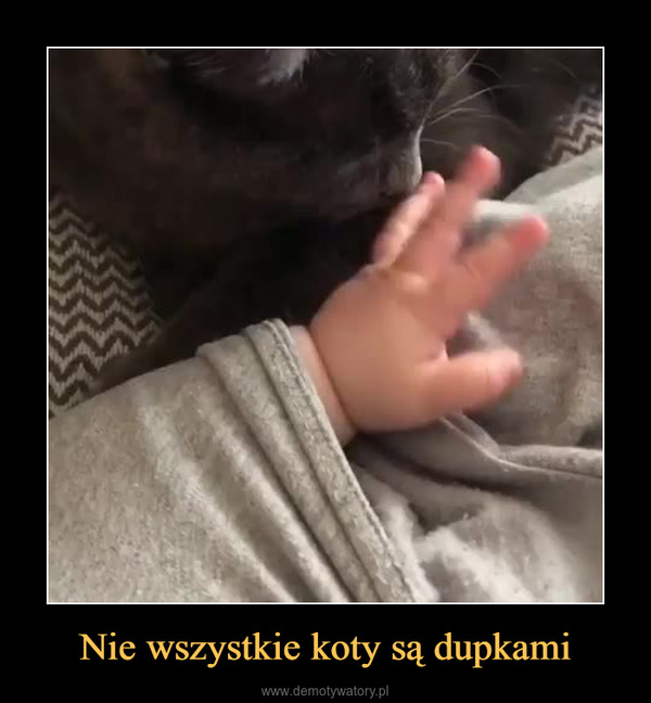 Nie wszystkie koty są dupkami –