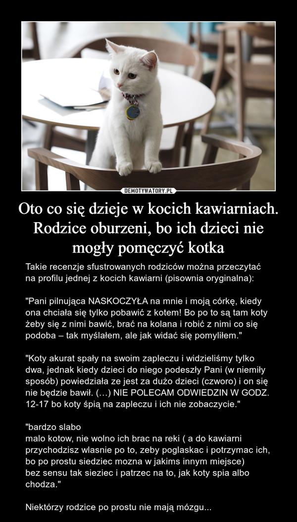 """Oto co się dzieje w kocich kawiarniach. Rodzice oburzeni, bo ich dzieci nie mogły pomęczyć kotka – Takie recenzje sfustrowanych rodziców można przeczytać na profilu jednej z kocich kawiarni (pisownia oryginalna):""""Pani pilnująca NASKOCZYŁA na mnie i moją córkę, kiedy ona chciała się tylko pobawić z kotem! Bo po to są tam koty żeby się z nimi bawić, brać na kolana i robić z nimi co się podoba – tak myślałem, ale jak widać się pomyliłem.""""""""Koty akurat spały na swoim zapleczu i widzieliśmy tylko dwa, jednak kiedy dzieci do niego podeszły Pani (w niemiły sposób) powiedziała ze jest za dużo dzieci (czworo) i on się nie będzie bawił. (…) NIE POLECAM ODWIEDZIN W GODZ. 12-17 bo koty śpią na zapleczu i ich nie zobaczycie.""""""""bardzo slabomalo kotow, nie wolno ich brac na reki ( a do kawiarni przychodzisz wlasnie po to, zeby poglaskac i potrzymac ich, bo po prostu siedziec mozna w jakims innym miejsce)bez sensu tak sieziec i patrzec na to, jak koty spia albo chodza.""""Niektórzy rodzice po prostu nie mają mózgu..."""