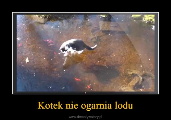 Kotek nie ogarnia lodu –