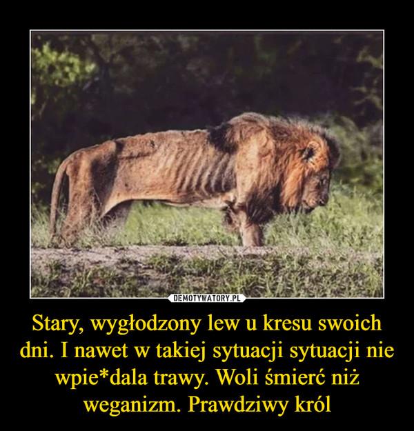 Stary, wygłodzony lew u kresu swoich dni. I nawet w takiej sytuacji sytuacji nie wpie*dala trawy. Woli śmierć niż weganizm. Prawdziwy król –