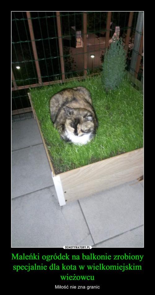 Maleńki ogródek na balkonie zrobiony specjalnie dla kota w wielkomiejskim wieżowcu