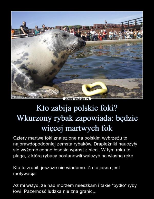 """Kto zabija polskie foki?Wkurzony rybak zapowiada: będzie więcej martwych fok – Cztery martwe foki znalezione na polskim wybrzeżu to najprawdopodobniej zemsta rybaków. Drapieżniki nauczyły się wyżerać cenne łososie wprost z sieci. W tym roku to plaga, z którą rybacy postanowili walczyć na własną rękęKto to zrobił, jeszcze nie wiadomo. Za to jasna jest motywacjaAż mi wstyd, że nad morzem mieszkam i takie """"bydło"""" ryby łowi. Pazerność ludzka nie zna granic..."""