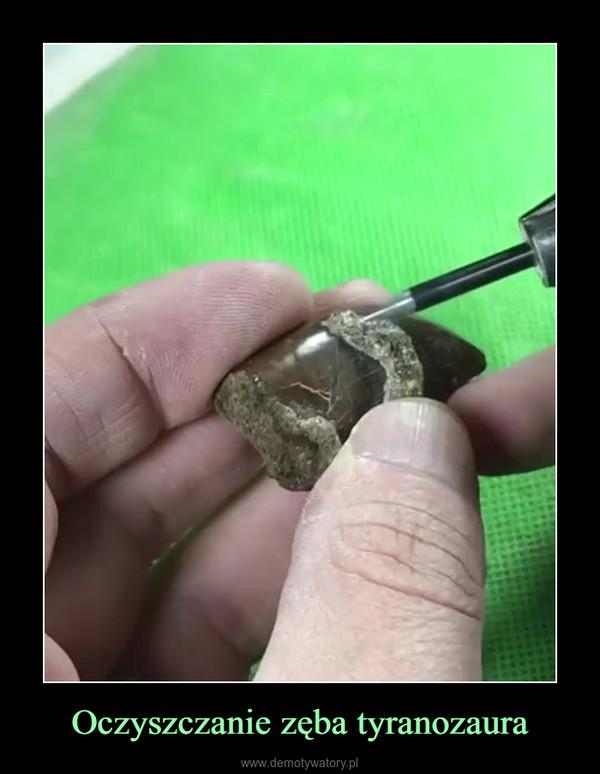Oczyszczanie zęba tyranozaura –