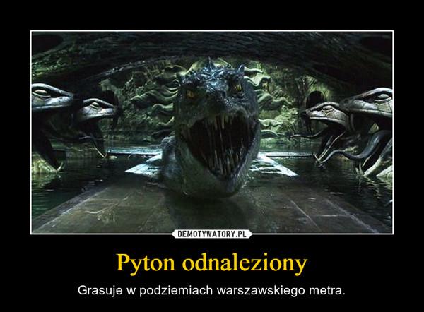 Pyton odnaleziony – Grasuje w podziemiach warszawskiego metra.
