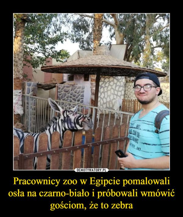 Pracownicy zoo w Egipcie pomalowali osła na czarno-biało i próbowali wmówić gościom, że to zebra –