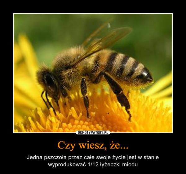 Czy wiesz, że... – Jedna pszczoła przez całe swoje życie jest w stanie wyprodukować 1/12 łyżeczki miodu