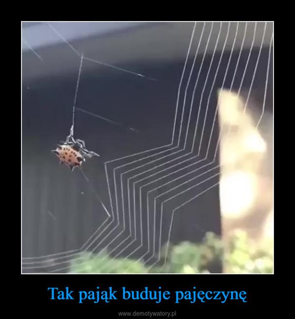Tak pająk buduje pajęczynę –