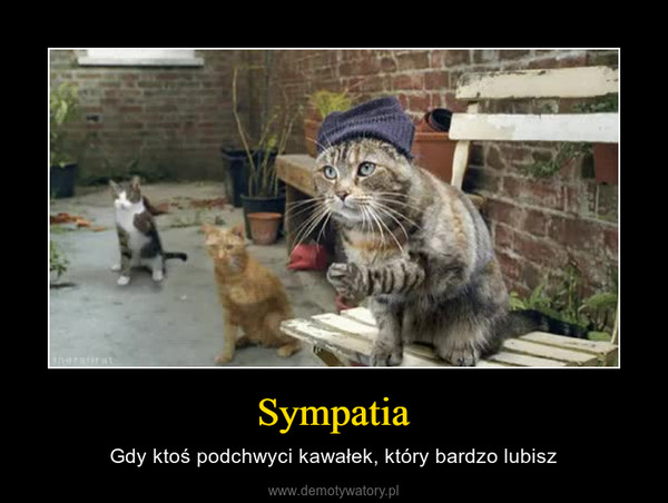Sympatia – Gdy ktoś podchwyci kawałek, który bardzo lubisz