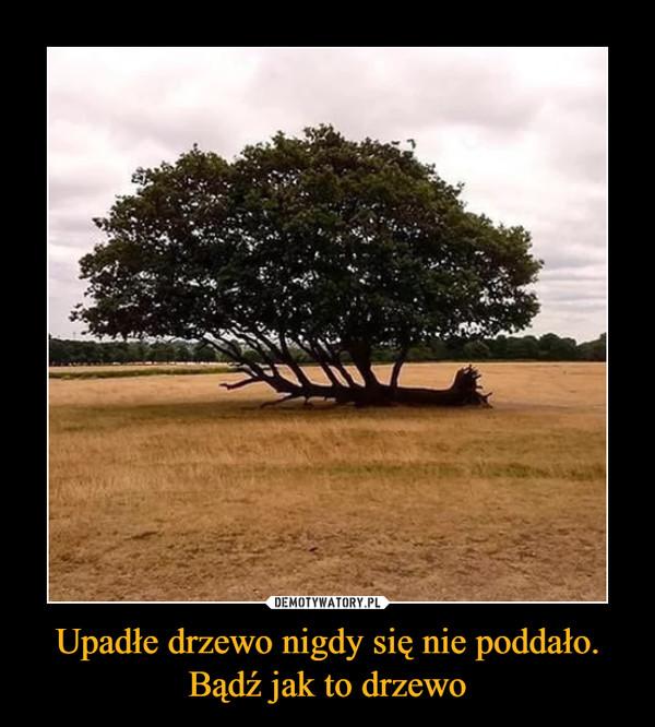 Upadłe drzewo nigdy się nie poddało. Bądź jak to drzewo –