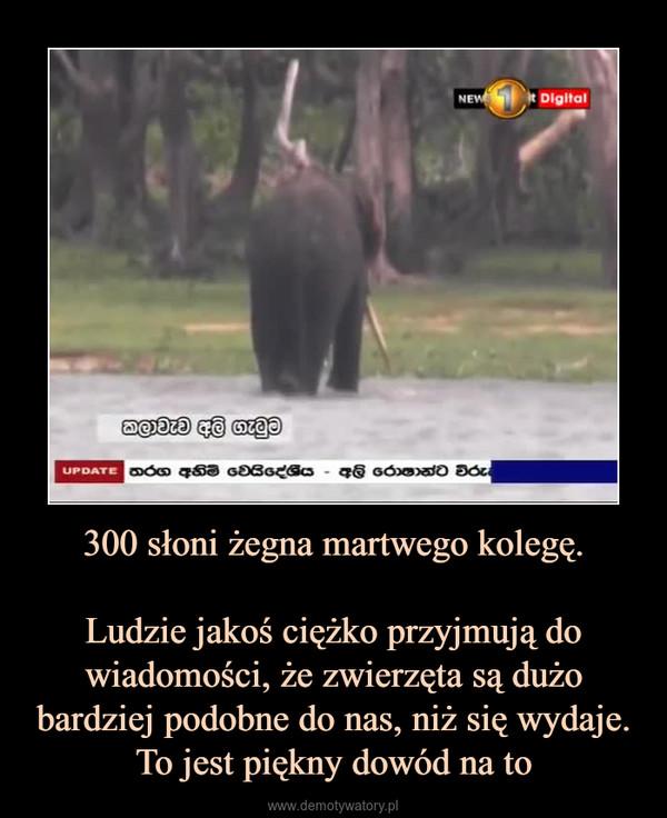 300 słoni żegna martwego kolegę.Ludzie jakoś ciężko przyjmują do wiadomości, że zwierzęta są dużo bardziej podobne do nas, niż się wydaje. To jest piękny dowód na to –