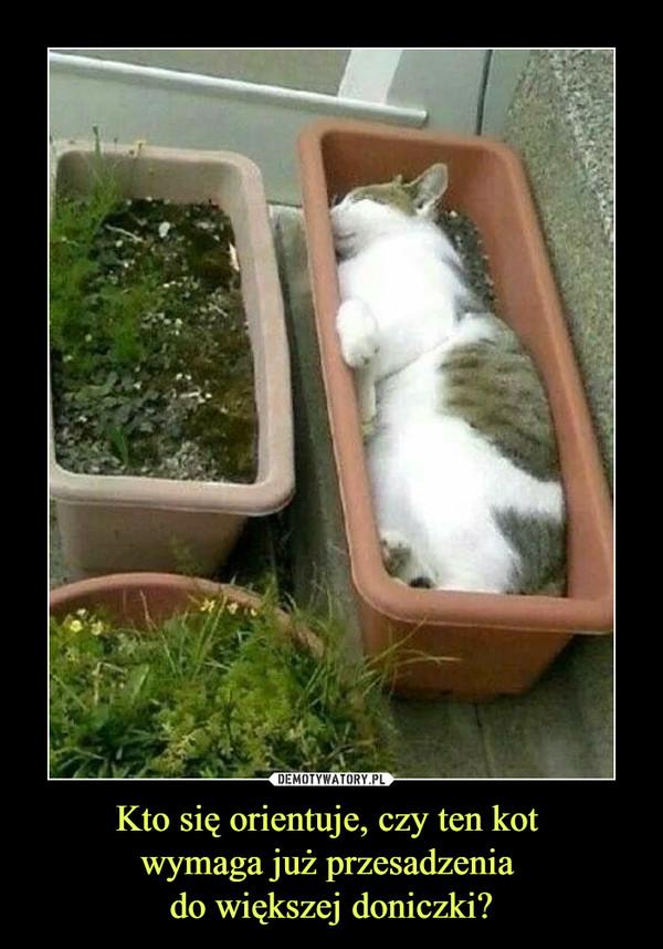 Kto się orientuje, czy ten kot wymaga już przesadzenia do większej doniczki? –
