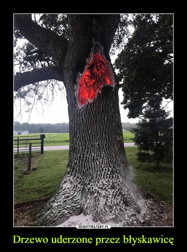 Drzewo uderzone przez błyskawicę –