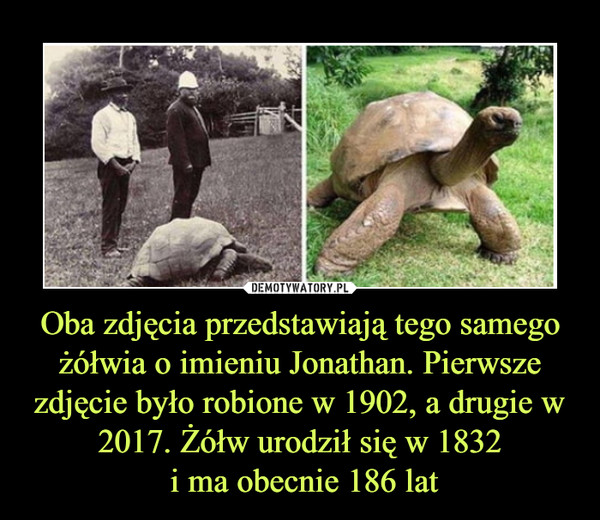 Oba zdjęcia przedstawiają tego samego żółwia o imieniu Jonathan. Pierwsze zdjęcie było robione w 1902, a drugie w 2017. Żółw urodził się w 1832 i ma obecnie 186 lat –
