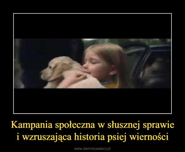Kampania społeczna w słusznej sprawie i wzruszająca historia psiej wierności –