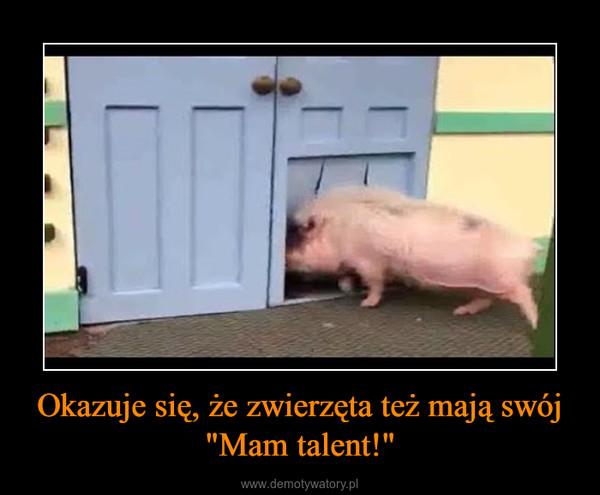 """Okazuje się, że zwierzęta też mają swój """"Mam talent!"""" –"""