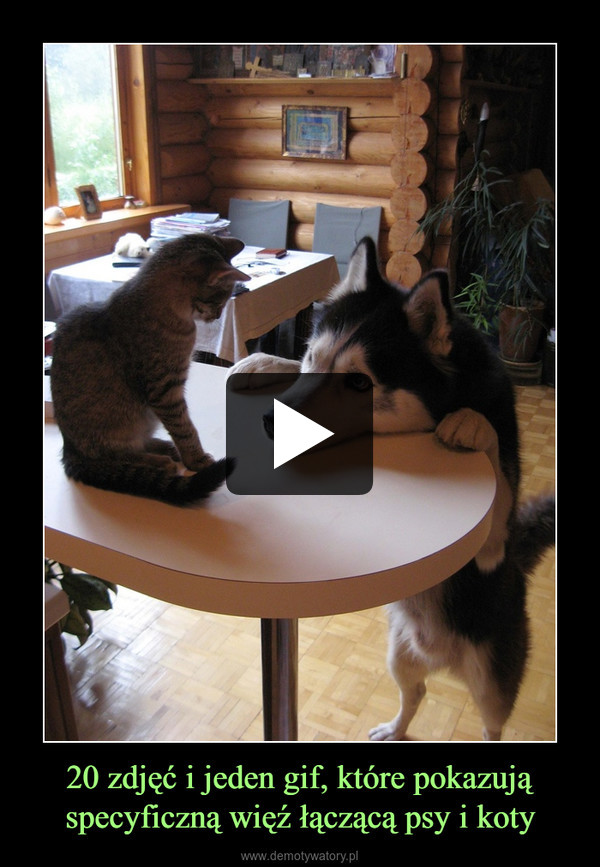 20 zdjęć i jeden gif, które pokazują specyficzną więź łączącą psy i koty –