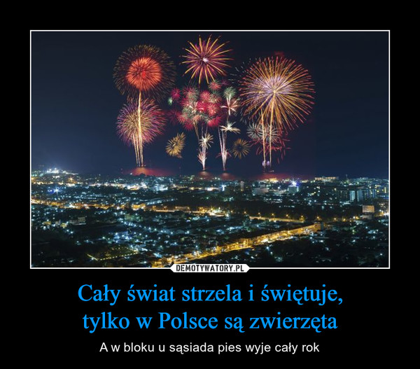 Cały świat strzela i świętuje, tylko w Polsce są zwierzęta