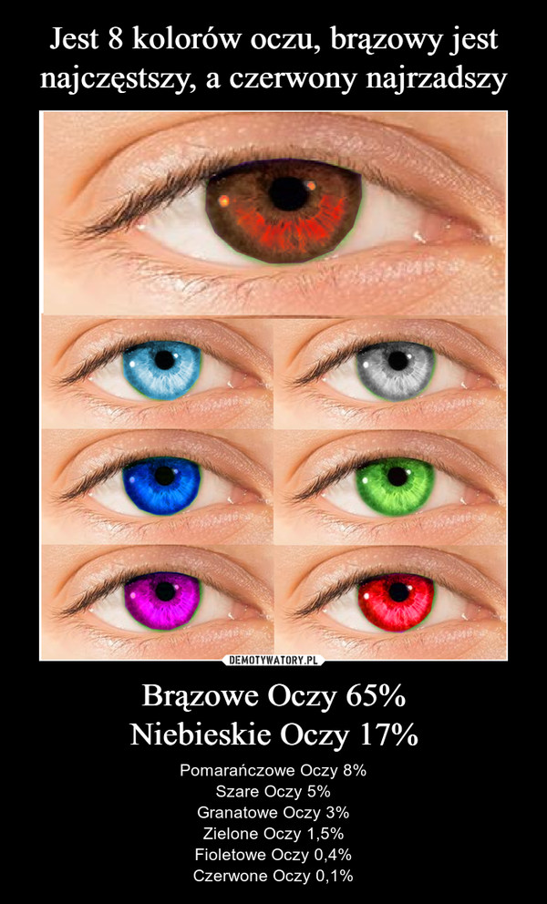 Brązowe Oczy 65%Niebieskie Oczy 17% – Pomarańczowe Oczy 8%Szare Oczy 5%Granatowe Oczy 3%Zielone Oczy 1,5%Fioletowe Oczy 0,4%Czerwone Oczy 0,1%