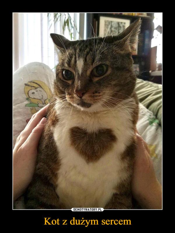 Kot z dużym sercem –