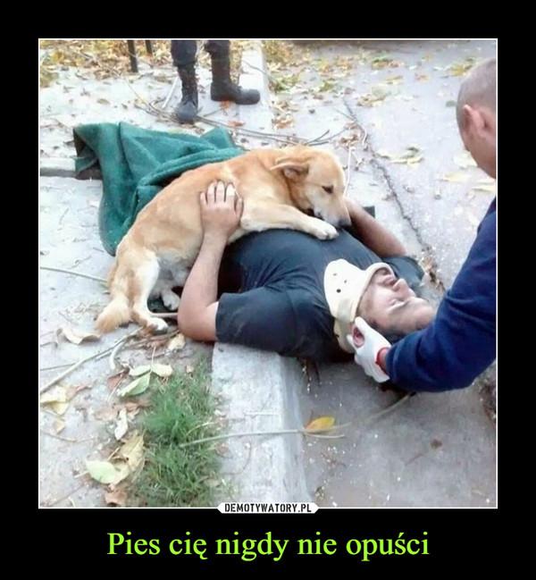 Pies cię nigdy nie opuści –