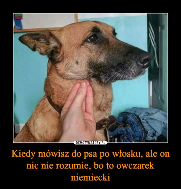 Kiedy mówisz do psa po włosku, ale on nic nie rozumie, bo to owczarek niemiecki –