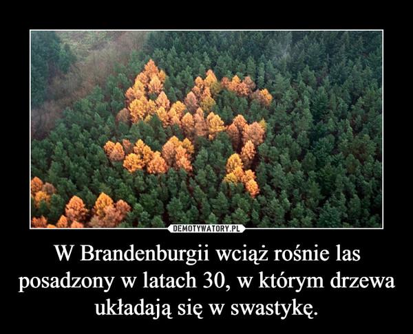 W Brandenburgii wciąż rośnie las posadzony w latach 30, w którym drzewa układają się w swastykę. –