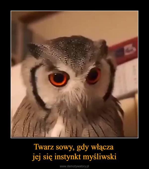 Twarz sowy, gdy włącza jej się instynkt myśliwski –