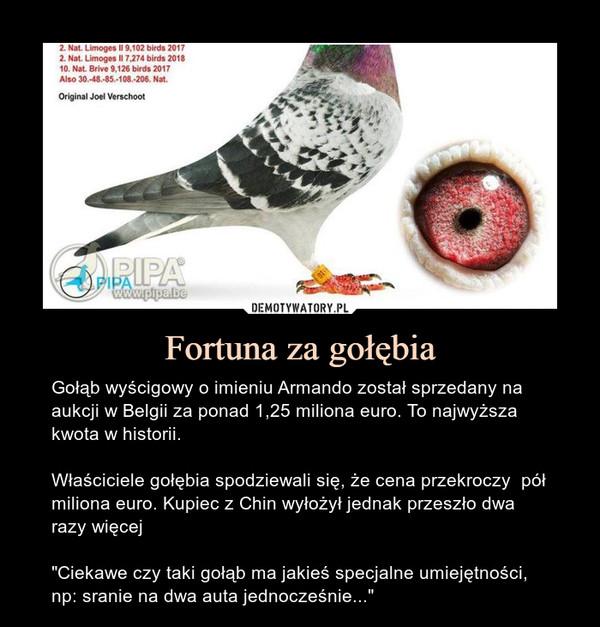 Fortuna za gołębia