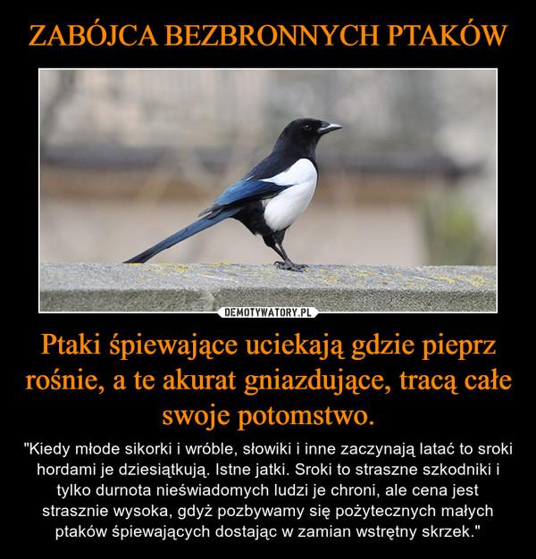 """Ptaki śpiewające uciekają gdzie pieprz rośnie, a te akurat gniazdujące, tracą całe swoje potomstwo. – """"Kiedy młode sikorki i wróble, słowiki i inne zaczynają latać to sroki hordami je dziesiątkują. Istne jatki. Sroki to straszne szkodniki i tylko durnota nieświadomych ludzi je chroni, ale cena jest strasznie wysoka, gdyż pozbywamy się pożytecznych małych ptaków śpiewających dostając w zamian wstrętny skrzek."""""""