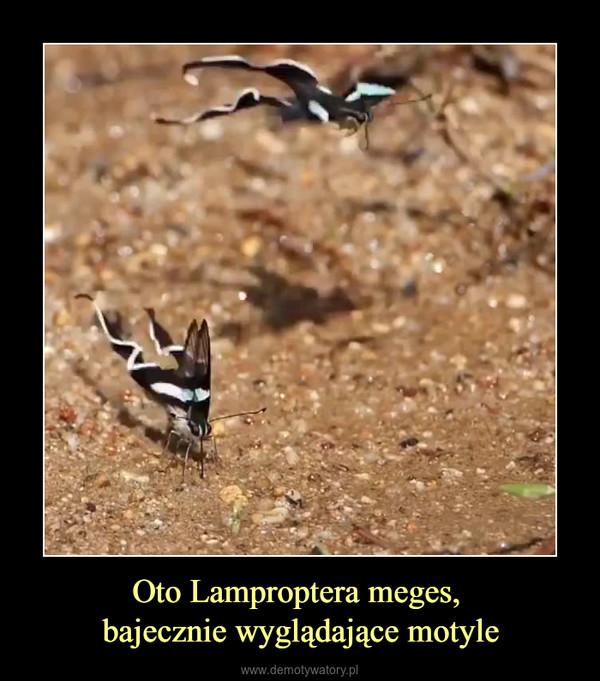 Oto Lamproptera meges, bajecznie wyglądające motyle –