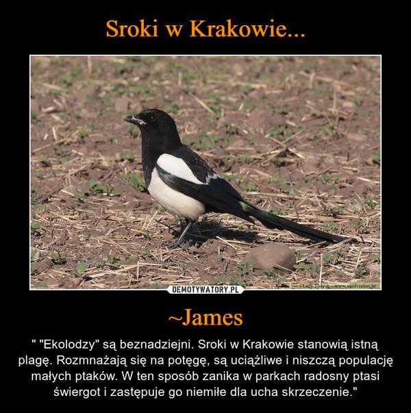 """~James – """" """"Ekolodzy"""" są beznadziejni. Sroki w Krakowie stanowią istną plagę. Rozmnażają się na potęgę, są uciążliwe i niszczą populację małych ptaków. W ten sposób zanika w parkach radosny ptasi świergot i zastępuje go niemiłe dla ucha skrzeczenie."""""""