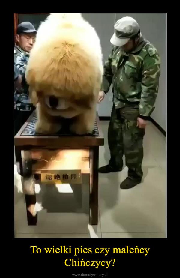 To wielki pies czy maleńcy Chińczycy? –