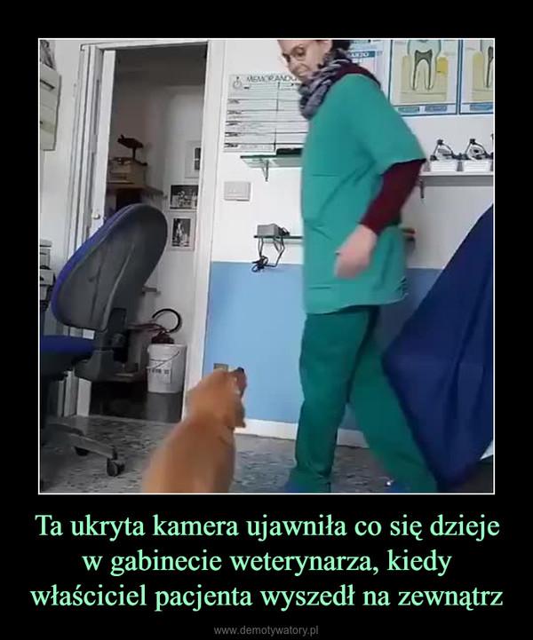 Ta ukryta kamera ujawniła co się dzieje w gabinecie weterynarza, kiedy właściciel pacjenta wyszedł na zewnątrz –