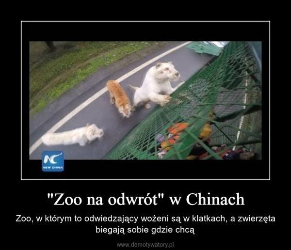 """""""Zoo na odwrót"""" w Chinach – Zoo, w którym to odwiedzający wożeni są w klatkach, a zwierzęta biegają sobie gdzie chcą"""