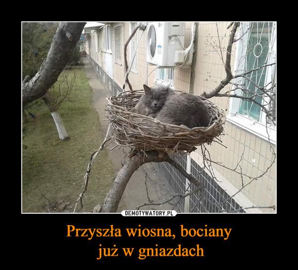 Przyszła wiosna, bociany już w gniazdach –